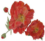 poppies icon.jpg